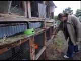 Бродячие собаки опять устроили резню кроликов и кур
