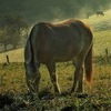 КК Единорог - катание на лошадях ♞