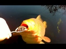 Coole Videos 365: 🐠🐟 Fütterung Der Fische / Feeding the Fish    ✪ Stern DuTube