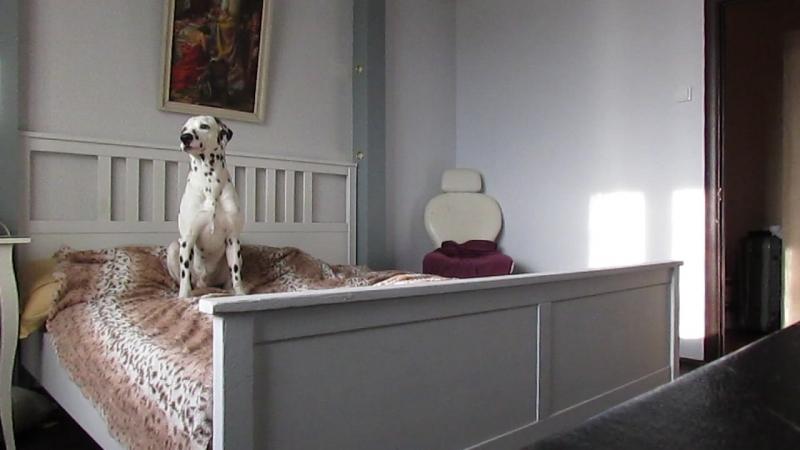 Что может делать собака пока ни кого нет дома?