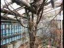 Чернобыль - Мертвая Романтика, Припять - Город Призрак...
