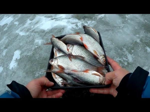 Нашли увесистую Плотву Щуку задавила погода Ловля рыбы на мормышку