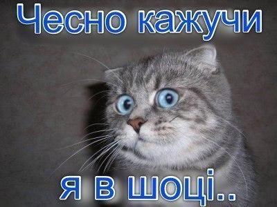 Кіт в шоці