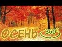 Панорамное Видео 360 VR 4K . Золотая осень. Зарисовка. Прогулка в парке. Листопад. Samsung gear 360