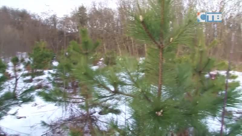 12.12.2018 Лесничества ЛО приглашают за елками