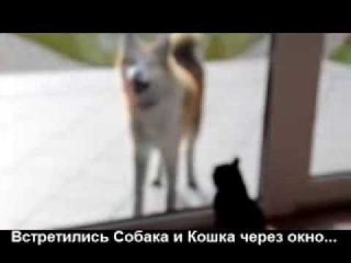 Драка Кошки и Собаки Накаляется!