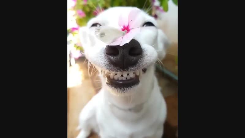 В Таиланде живет собака, которая всегда улыбается. Это джек-рассел-терьер по кличке Евро.