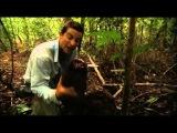 Ultimate Survival Bear Grylls protection against mosquitoes / Выжить Беар Гриллс защита от москитов
