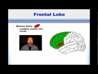 Language: Broca and Wernicke's Areas
