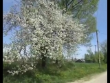 Евгений Мартынов.....Яблони в цвету
