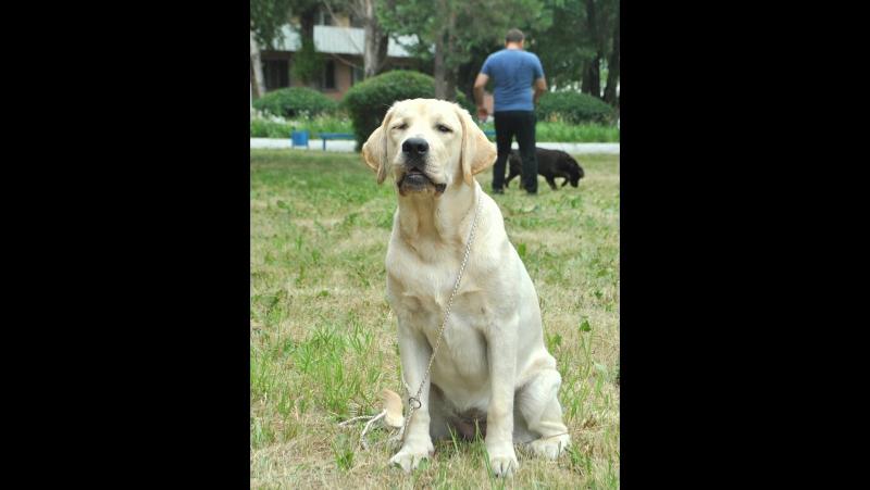 Lumier De Vie Philadelphia (Konsul Lab Bona Fide Rediant Star Latisha) - 6 month, BIS Puppy 3