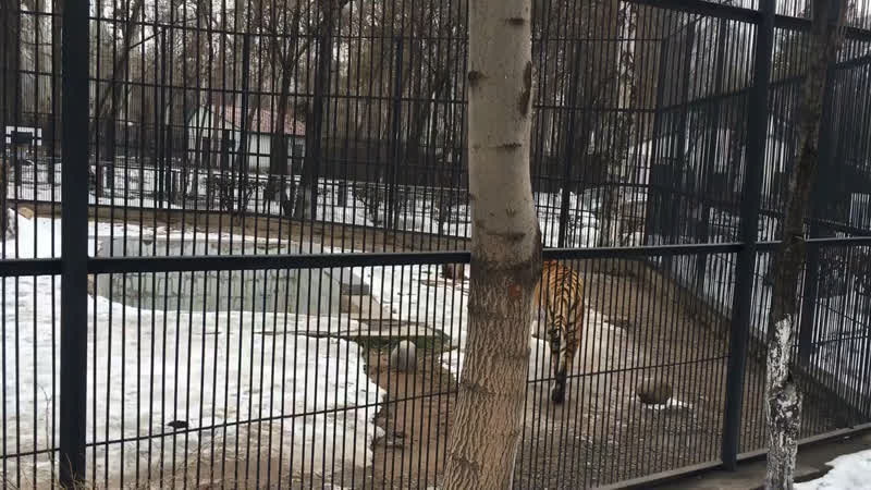 Зоопарк 13 март 2017 ж