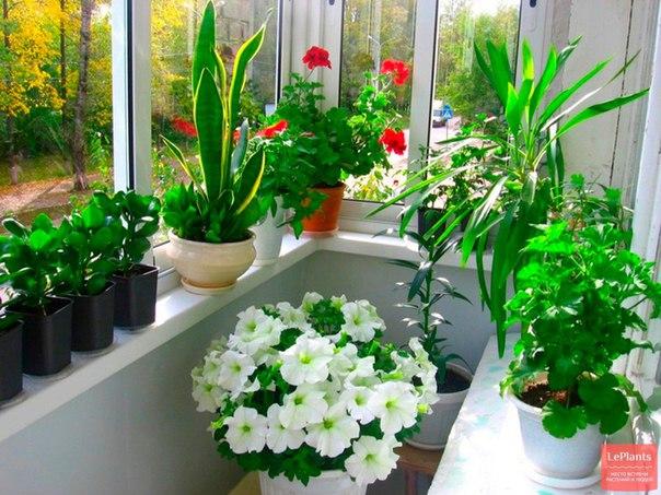 комнатных комнатах фото цветов в