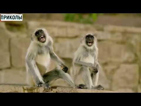 ПРИКОЛЫ КЛАСС GRACIOSO ЮМОР 有趣的视频 funny - 14 » Freewka.com - Смотреть онлайн в хорощем качестве