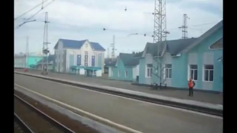 Тайга__По