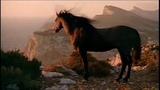 Не гони коней_Баян Микс
