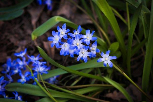 Пережить февраль и... весна!
