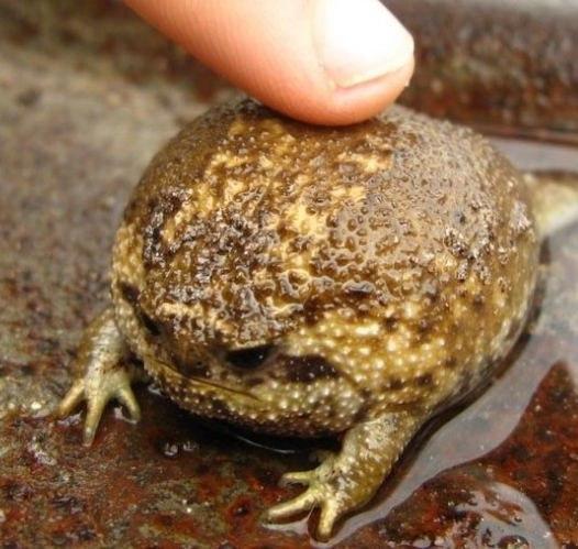 ЛАЙКТАЙМ , БУДЕТ ВИСЕТЬ ТРИ ДНЯ 🎆🎆🎆🎆 Фото красивой жабки в комменты 😽