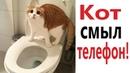 Лютые приколы. КОТ СМЫЛ ТЕЛЕФОН! СМЕШНЫЕ КОТЫ! РЖАКА ДО СЛЁЗ - Domi Show