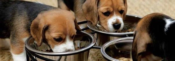 Cinco claves para tener un perro sano y feliz identi - Mascotas originales para tener en casa ...