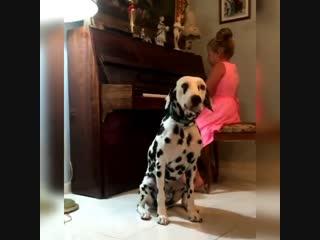 Оказывается, бывают вокальные конкурсы для собак -) Так вот - это победитель. Без шуток -)