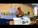 16092018, Выставка кошек, Харьков, Радмир Экспохолл, WCF, презентация Сибирской порды