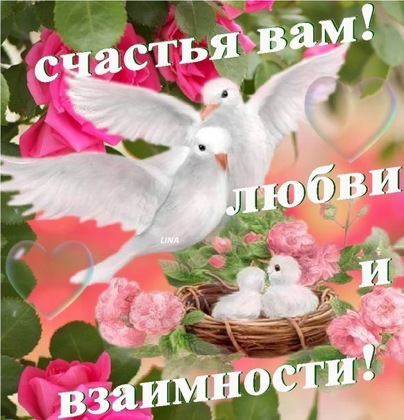 Открытки с никахом на русском языке, поздравление