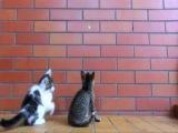 Милое видео про наших любимых и шаловливых котят)))