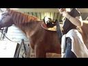 Как седлать лошадь?