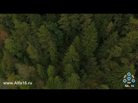 Медитация - Дух Кедра. Сефера Агни. Alfa16