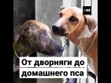 От дворняги до домашнего пса