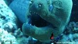 #Scuba_Diving with Tako Diving Hurghada.