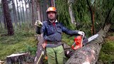 Complete felling and processing of a tree with a chainsaw Husqvarna 562 XP