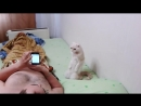 Постоянно ржу когда вижу это видео Ну как можно научить кота вставать смирно под гимн Респект дрессировщику