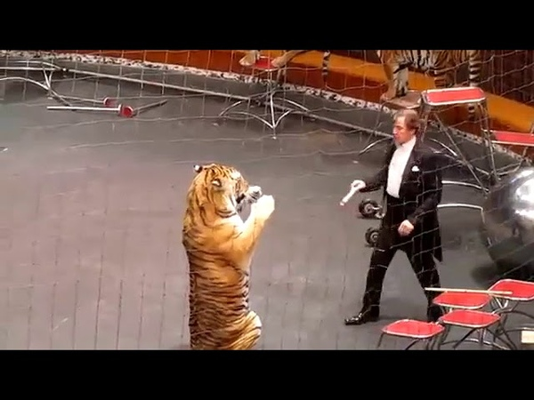 Circus tiger attack animal planet circus tiger