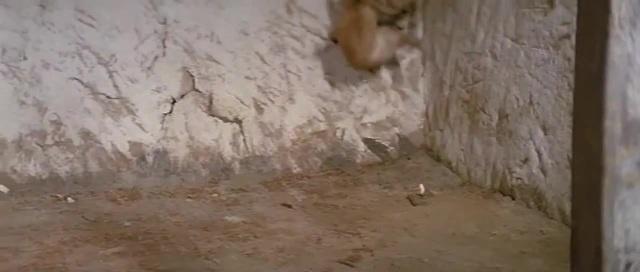 Cat Fight With Cobra (catfight) ver.II
