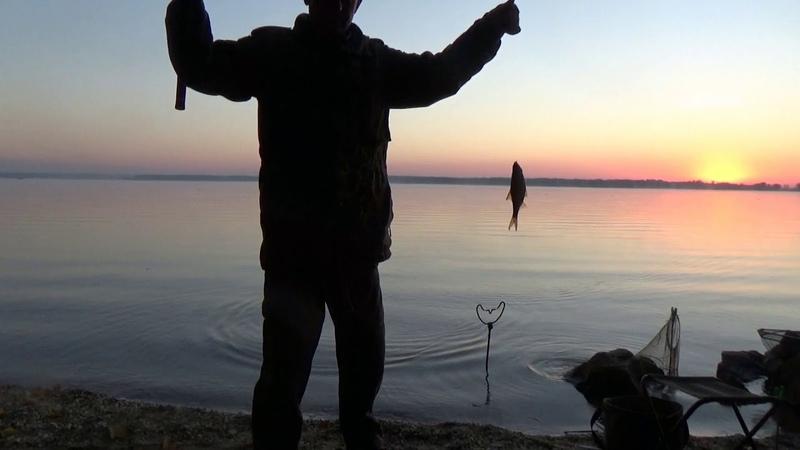 Ловля плотвы и густеры в октябре на водохранилище фидером.