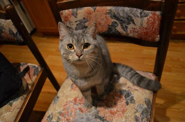 Кошка шерстезавод...