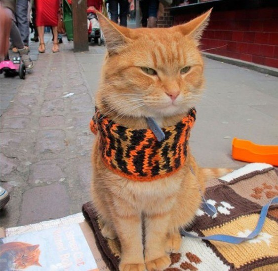 Кот спас хозяина | ВКонтакте