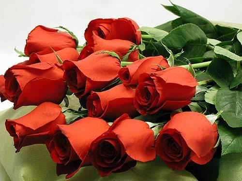 фотография розы: