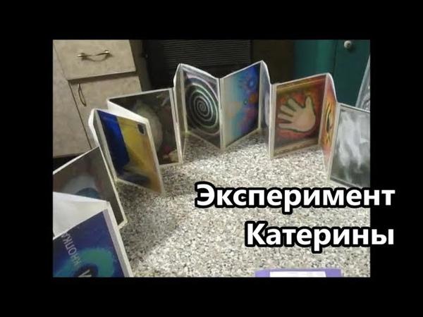 Эксперимент Катерины (24.01.19)