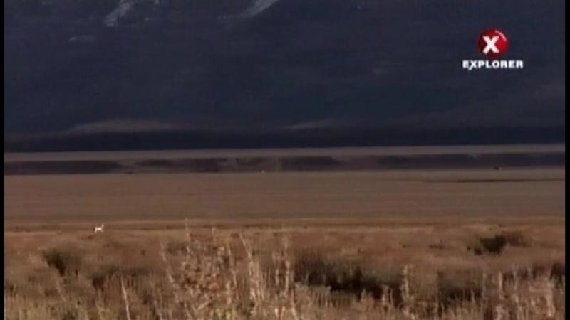 EE-NW. Великие Равнины, Вилорогов миграции (Северная Америка)