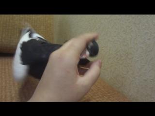 Злобный голубь :D