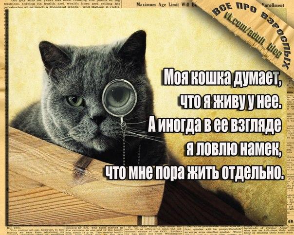 Кошачий юмор - Страница 4 RuKmAvW9Nso