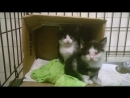 Котята МОСЬКА и АРЧИ ( видео 1)