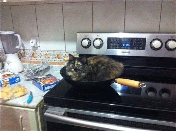 Мой кот не из умных котов, картинки юмор и приколы. Картинки