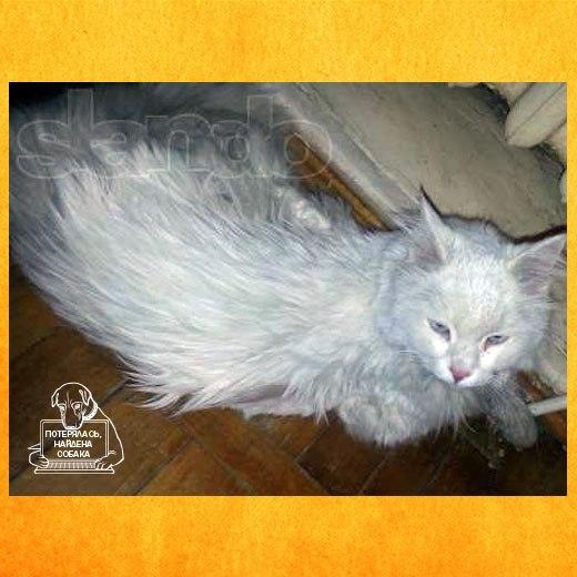 Ссылка нашелся белый кот — бюро