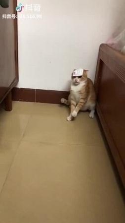 Cat /2