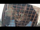 Супер кот_Смешное видео про котов .mp4