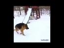 Я хочу себе такую собаку